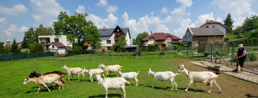Činnost farmy